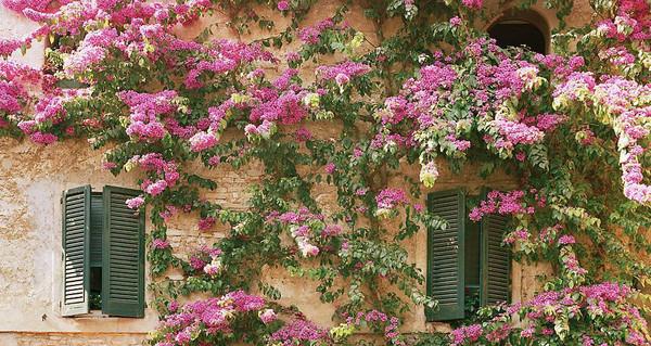 SUNNY-BOUGAINVILLEA-LAKE_COMO_ITALY_1_grande