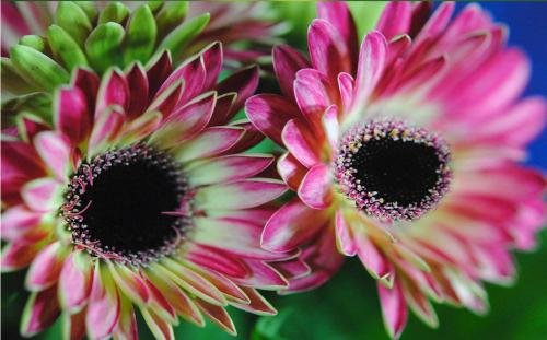 flowers_beautiful-w500